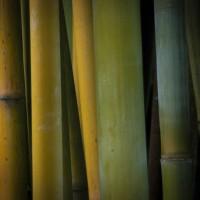 Med bambusmøbler bliver det nemt at indrette dit hjem