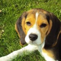 Det bedste hundefoder til din hund