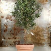 Med kunstige oliventræer bliver dit hjem ved med at være grønt